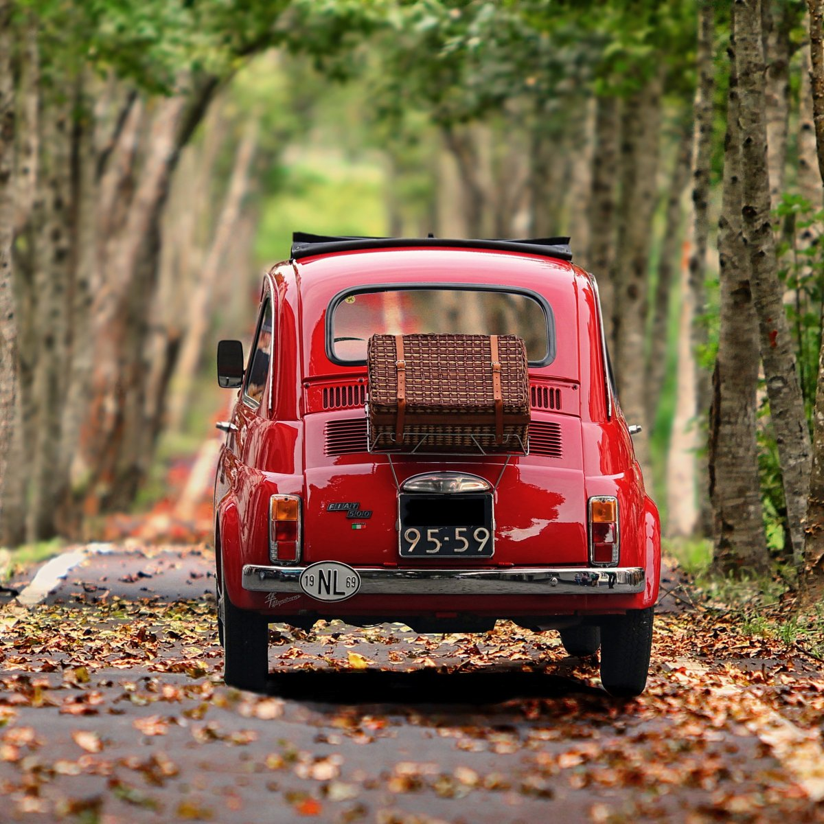 An image of the back of a 1960s red Volkswagen Beetle as it drives away down a leaf-strewn road. The road is lined with tall trees.